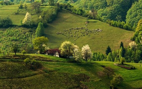 Wallpaper Spring, morning, hills, flock, forest, house