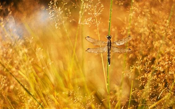 Wallpaper Summer, grass, dew, glare, dragonfly