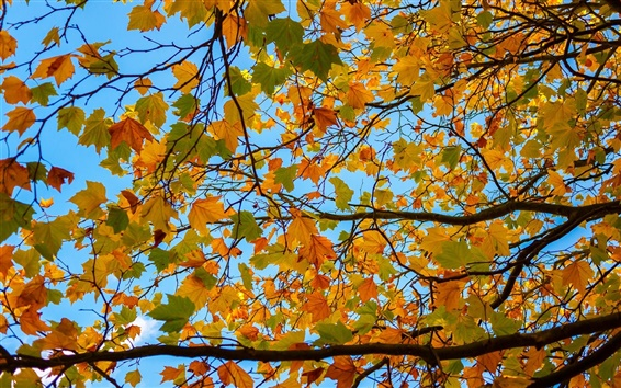 Wallpaper Tree, branches, yellow leaves, autumn