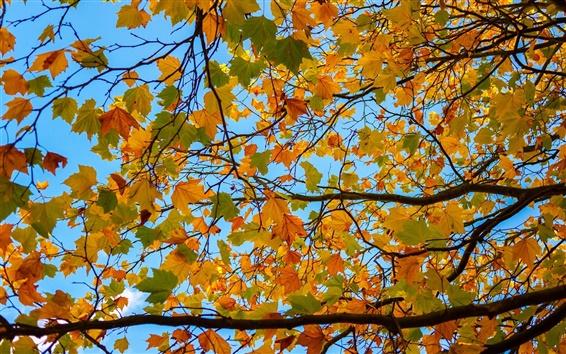 Обои Дерево, ветви, желтые листья, осень