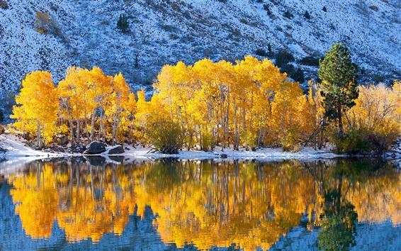 Fond d'écran Les arbres, les feuilles jaunes, lac, neige, hiver, réflexion de l'eau