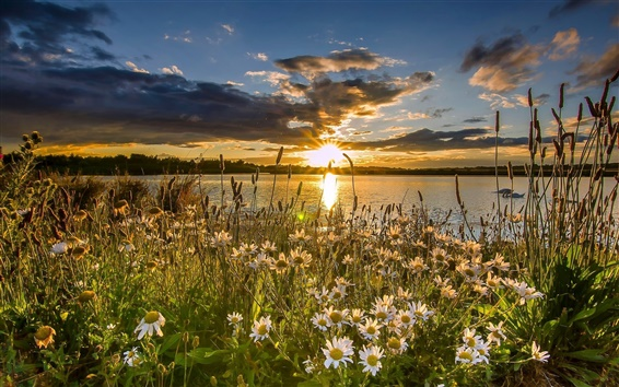 Обои Западный Йоркшир, Англия, озеро, ромашки, закат