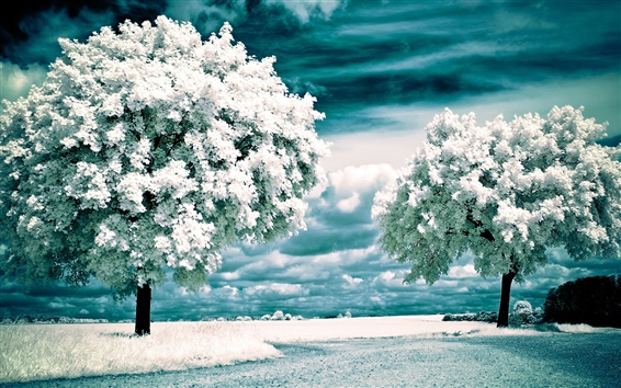 Wallpaper White flowers blossom, clouds, trees