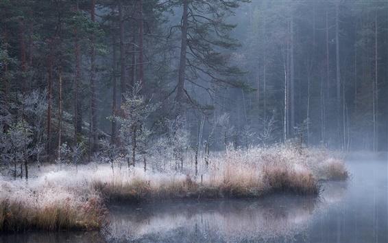 Wallpaper Autumn, forest, river, fog, dusk