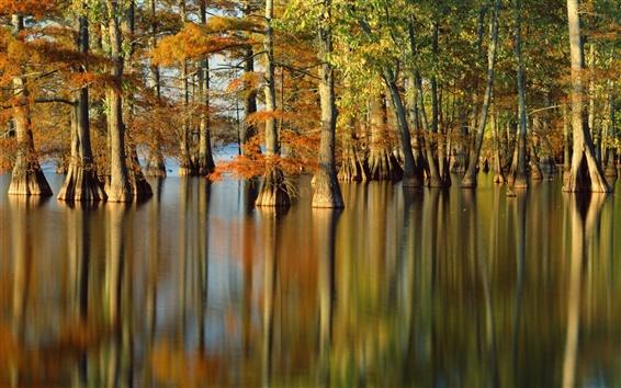 Fond d'écran Automne, arbres, rivière, réflexion de l'eau