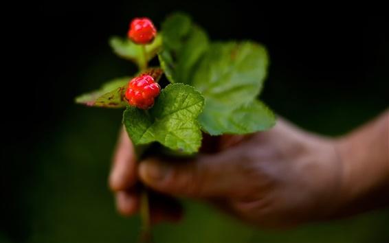 Wallpaper Berries, cloudberries, bokeh