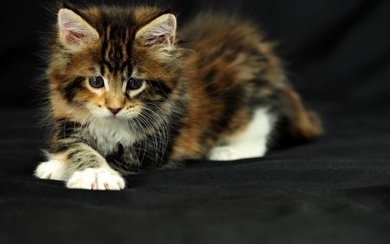Wallpaper Cute kitten, black background