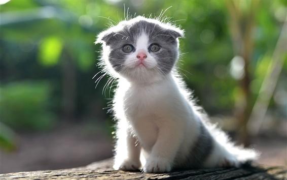 Wallpaper Cute kitten, furry cat