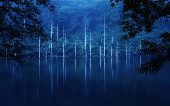 Wallpaper Forest, night, hillside, lake, trees, fog