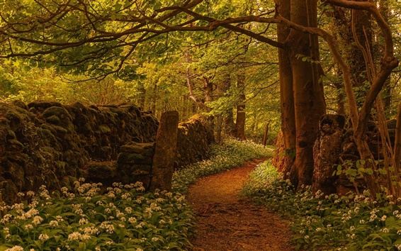 Wallpaper Forest, trees, footpath, flowers, fence, England