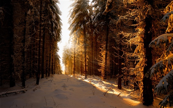 Wallpaper Germany, winter, snow, forest, sun rays