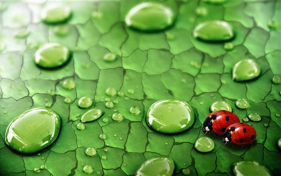 Wallpaper Green leaf, water drops, dew, insects, ladybirds