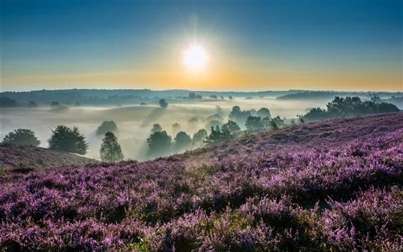 Обои Ходж Veluwe Национальный Парк, Гелдерланд, Нидерланды, рассвет, восход солнца, туман