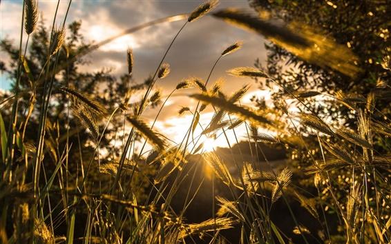 Fond d'écran Lumière, de l'herbe, bokeh, soleil