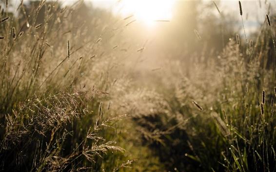 Fond d'écran Matin, la lumière du soleil, de l'herbe