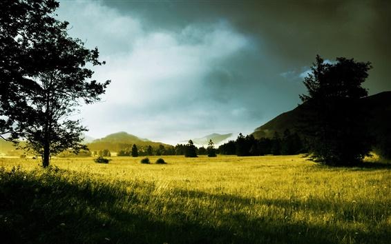 Fond d'écran Matin, les arbres, la lumière du soleil, collines, herbe