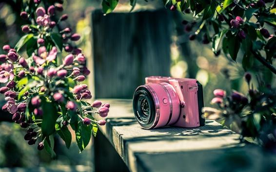 壁紙 ニコンカメラ、ピンク、花