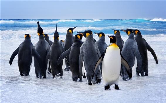 Fondos de pantalla Los pingüinos, aves, nieve