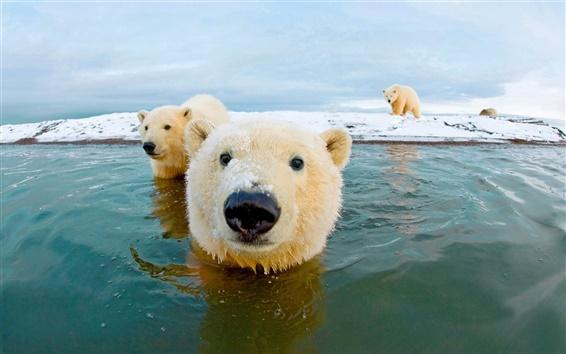 壁紙 シロクマ、北極、空、海