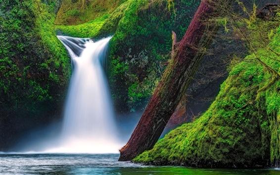 Обои Punch Bowl водопад, Eagle Creek, ущелье реки Колумбия, штат Орегон, США, мох