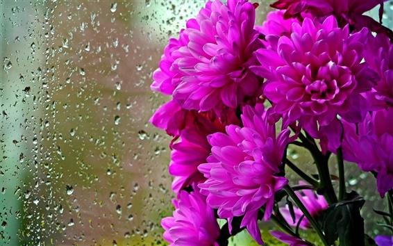 Wallpaper Purple flowers, glass, water drops