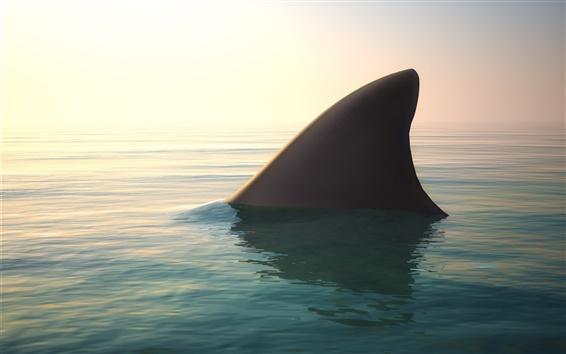 Fond d'écran requin, aileron, eau, océan
