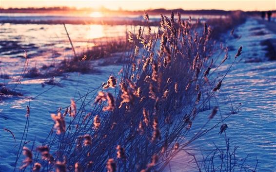 Обои Снег, трава, утро, восход солнца