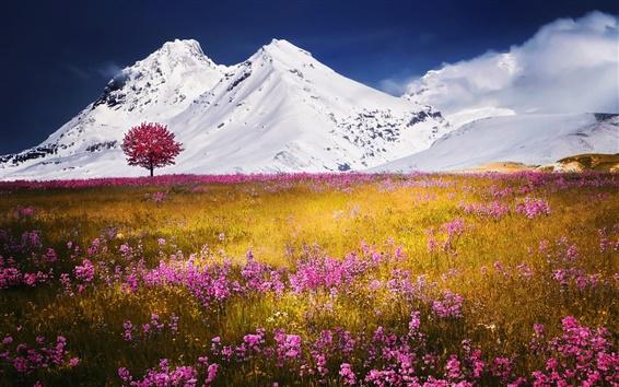 Wallpaper Snow mountain, pink wild flowers, grass