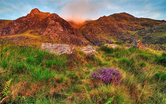Обои Сноудония, небо, облака, горы, скалы, цветы, трава