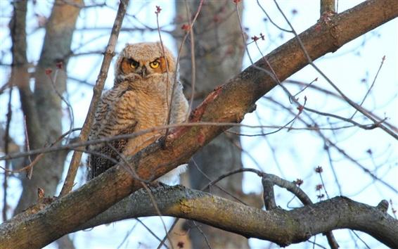 Wallpaper Tree, owl, bird