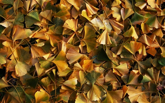 Fond d'écran Les feuilles jaunes, la terre, la rosée, automne