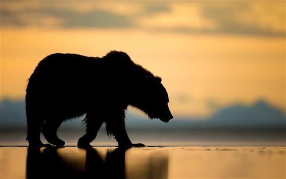 Wallpaper Alaska, bear, sunset, silhouette
