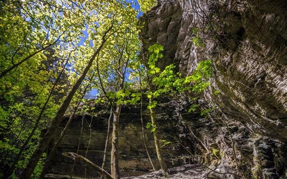 Обои Эрроутаун, Новая Зеландия, лес, деревья, скалы, солнце