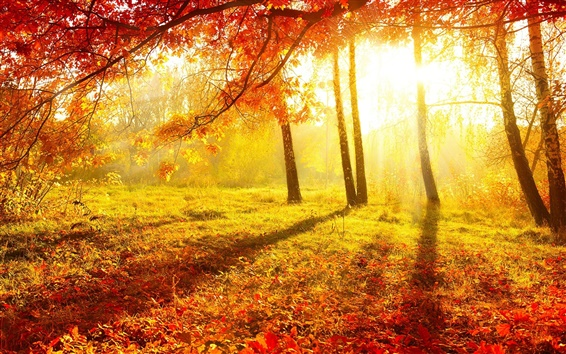 Wallpaper Beautiful autumn, forest, trees, red leaves, grass, sun rays