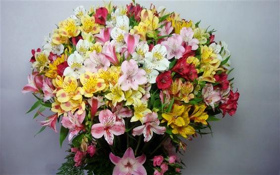 Обои Красочные альстромерия, букет, цветы