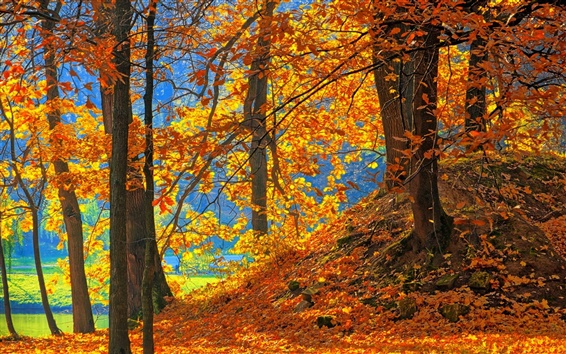 Wallpaper Forest, trees, red leaves, ground, autumn