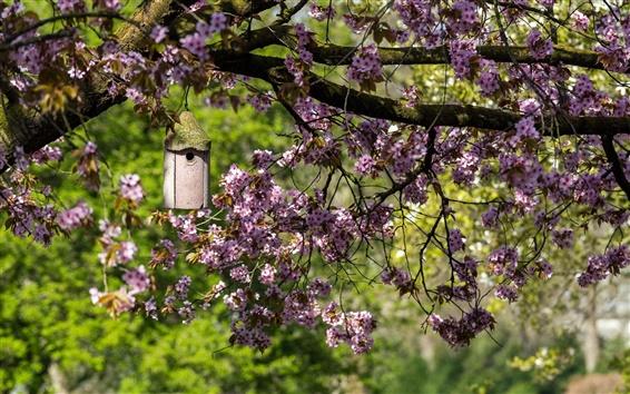Обои Сад, весна, цветы вишни