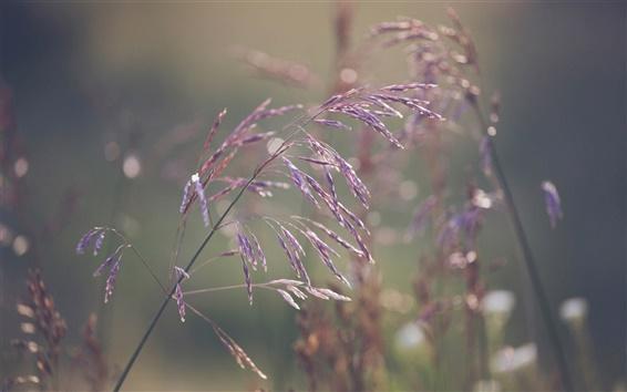 Wallpaper Grass, bokeh