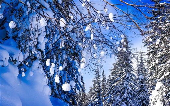Обои Хабаровский край, Россия, красивая зима, снег, лес, деревья, ветки