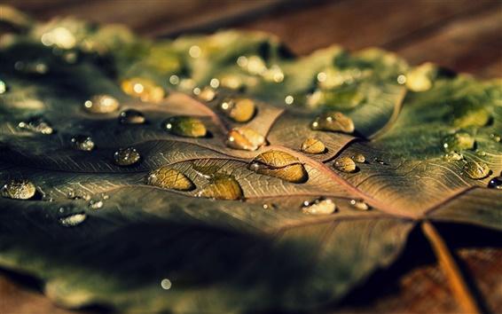 Wallpaper Leaf macro, water drops, sunlight