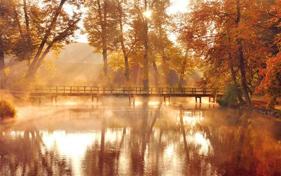 Обои Природа, осенние деревья, желтые, вода отражение, деревянный мост, солнечный свет