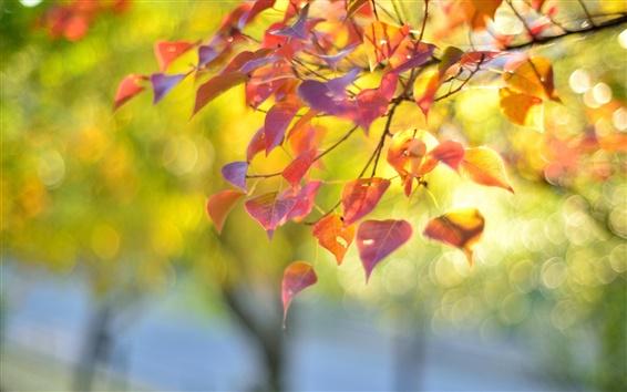Fondos de pantalla Naturaleza, rama, hojas rojas, otoño, desenfoque