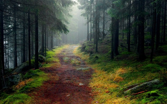Wallpaper Nature landscape, forest, trees, road, mist