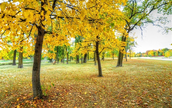 Wallpaper Park, trees, yellow leaves, grass, autumn