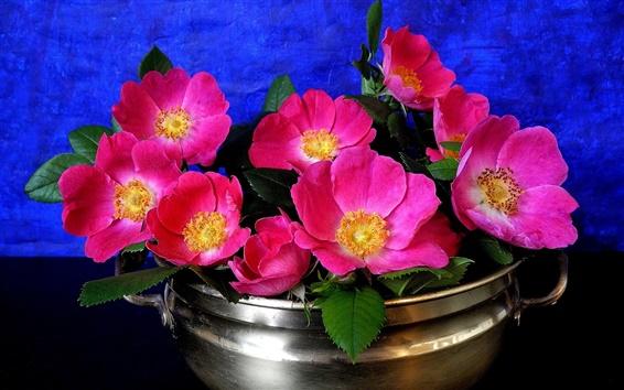 Fond d'écran Fleurs roses, pétales, vase