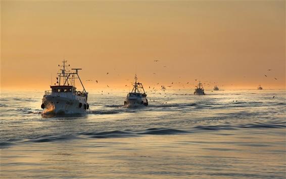 Fond d'écran Mer, oiseaux, mouettes, bateaux, matin