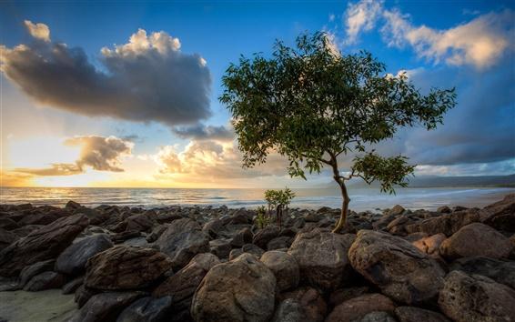 Papéis de Parede Mar, rochas, árvore só, céu, nuvens, pôr do sol