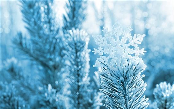 Fond d'écran Flocon de neige, aiguilles de pin, branches, hiver, neige