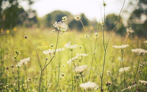 Papéis de Parede Verão, grama, flores