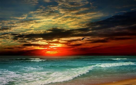 Wallpaper Sunset, beach, sea, waves, tropical, clouds, bird